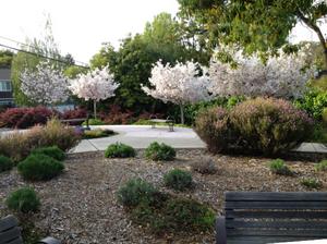 Patricia Wharton Park